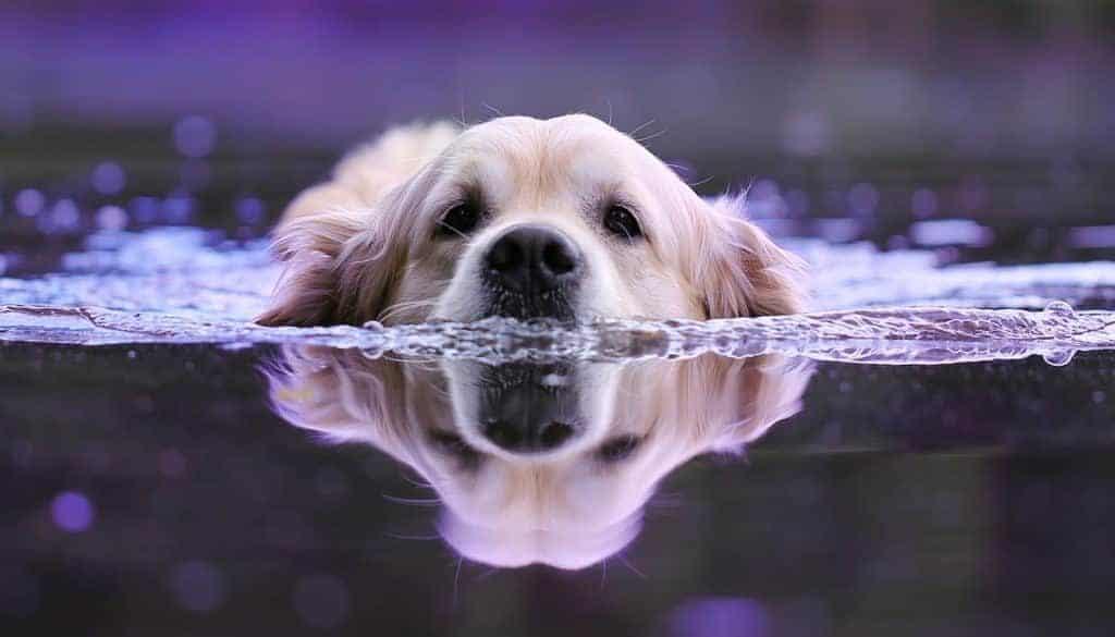 dog-3301255_1280